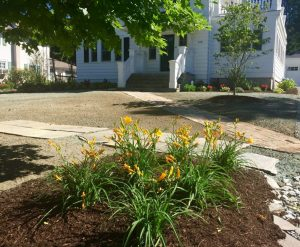 Day lilies beds